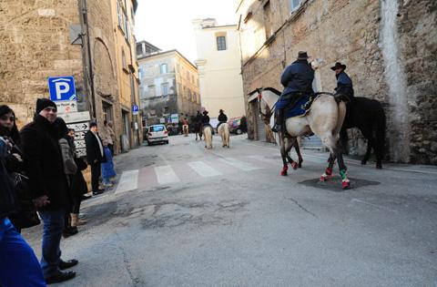 Cavalli Infiocchettati 2013