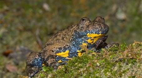 La tutela delle popolazioni di anfibi nella Riserva Naturale dei Monti Navegna e Cervia